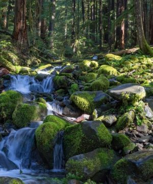smooth-water-flowing-over-moss-covered-rocks